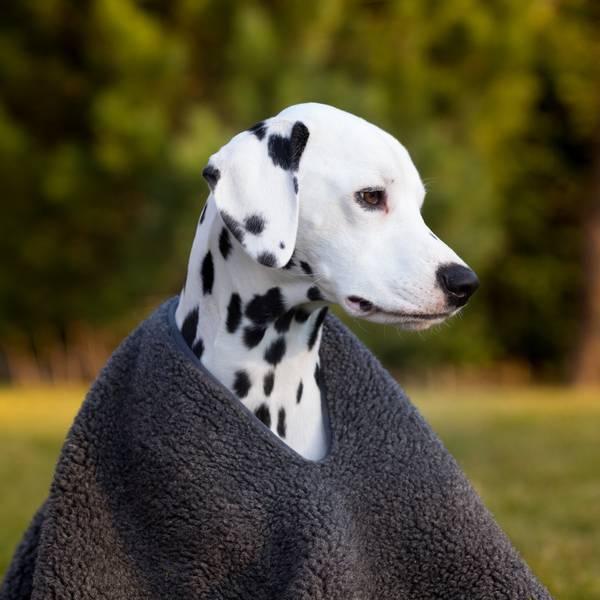 Image of Dog blanket/poncho