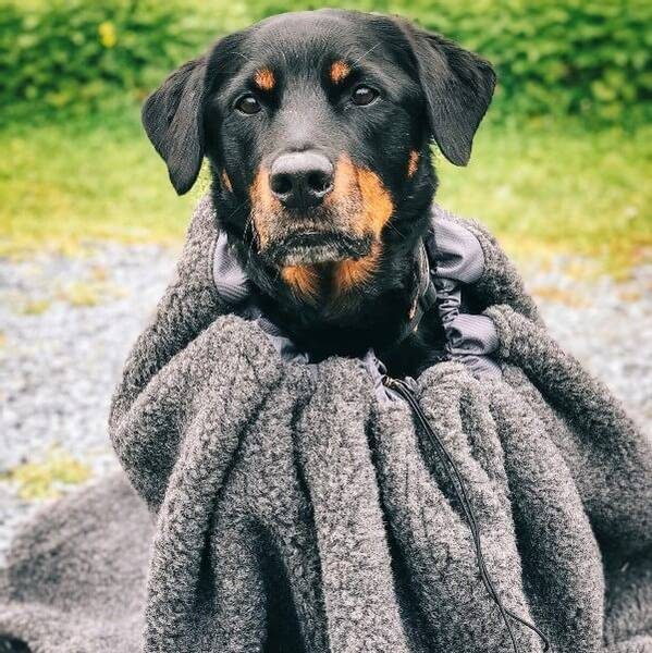 Image of CAVE - wool warmth bag for dogs